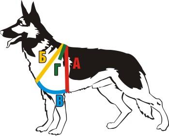 Шлейка для собаки схемы